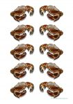 Sea Creatures Crab Counters Bev Dunbar Maths Matters