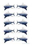 Sea Creatures Shark Counters Bev Dunbar Maths Matters
