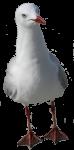 Seagull faces foward (Position F/1/2) Bev Dunbar Maths Matters