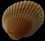 Seashell11---Bev-Dunbar-Maths-Matters-Resources