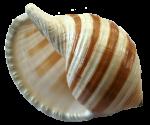 Seashell32-Bev-Dunbar-Maths-Matters