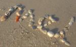 Shell Name Mel - Bev Dunbar Maths Matters