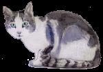 Smokey Kitten 20 weeks 2190 grams - John Duffield duffield-design