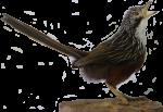 Songbird Bev Dunbar Maths Matters