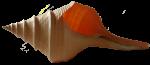 Spiral Shell Bali Bev Dunbar Maths Matters