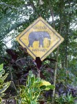 Square elephant Crossing Sign Bali Bev Dunbar Maths Matters