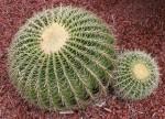 Squashed Sphere Cactii Bev Dunbar Maths Matters