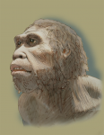 Stone Age man (Ancient Africa) John Duffield duffield-design