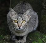 Symmetrical Cat Face Bev Dunbar Maths Matters