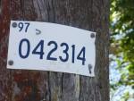 Telegraph Pole 42314 Bev Dunbar Maths Matters