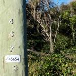 Telegraph Pole 447 Bev Dunbar Maths Matters