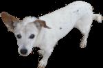 Tillie - 17 year old dog Bev Dunbar Maths Matters