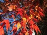Time - Seasons - Autumn Leaves Bev Dunbar Maths Matters