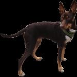 Toby - dog - 11 Months Bev Dunbar Maths Matters