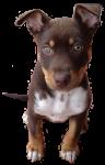 Toby - dog - 2 Months Bev Dunbar Maths Matters
