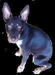 Toby - dog - 6 Months Bev Dunbar Maths Mmatters