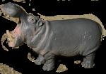 Toy Hippo Bev Dunbar Maths Matters