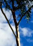 Tree Branch Acute Angles Bev Dunbar Maths Matters