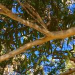 Tree Branch Angles Bev Dunbar Maths Matters