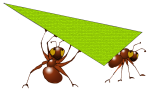 Triangle Ants - Scalene - John Duffield duffield-design