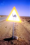 Triangular Road Sign Beware of Camels Egypt Bev Dunbar Maths Matters