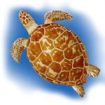 Turtle - John Duffield duffield-design