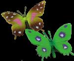 Two Butterflies Bev Dunbar Maths Matters