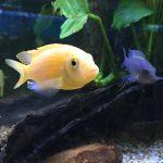 Two fish Bev Dunbar Maths Matters