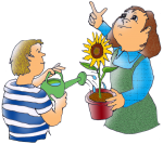 Watering sunflower John Duffield duffield-design