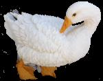 White fluffy duck - farm animals  Bev Dunbar Maths Matters