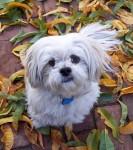 White puppy Bev Dunbar Maths Matters