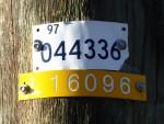 Yellow 16096 Bev Dunbar Maths Matters