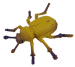 Yellow Beetle Bev Dunbar Maths Matters