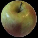 Yummy apple Bev Dunbar Maths Matters