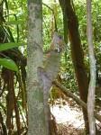 iguana Bev Dunbar Maths Matters