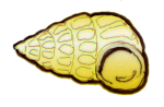 shell 4 - John Duffield duffield-design