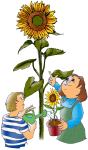 sunflower kids John Duffield duffield-design