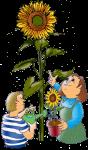 sunflower kids John Duffield duffield-design