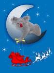 xmas koala - John Duffield duffield-design